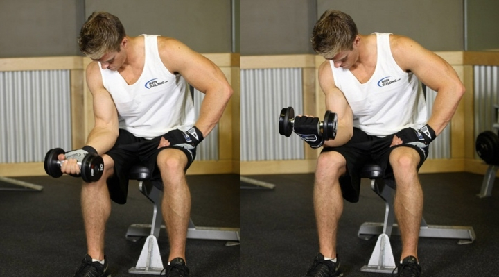 seated-one-arm-dumbbell-palms-up-wrist-curl-1747
