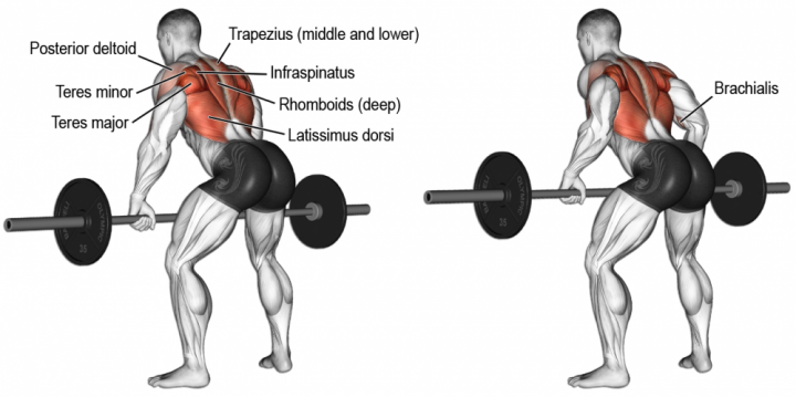 barbell-bent-over-row-1617